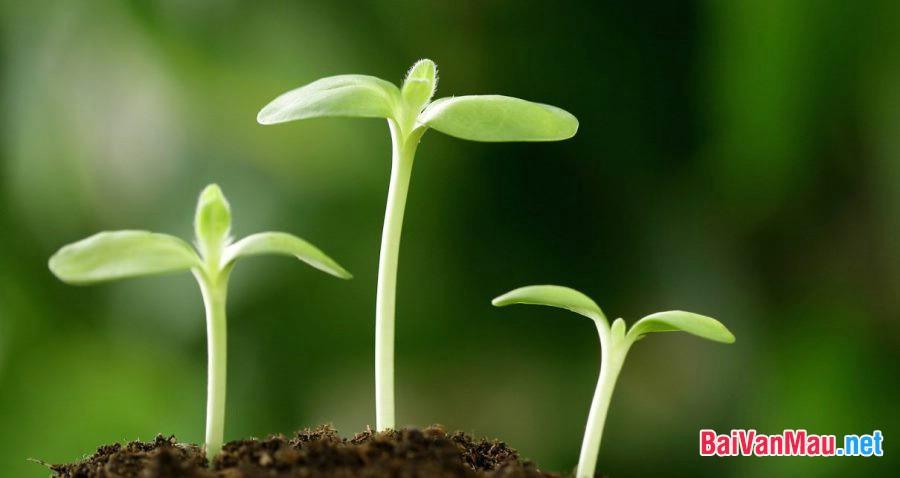 Chứng minh câu tục ngữ: Một cây làm chẳng nên non; Ba cây chụm lại nên hòn núi cao