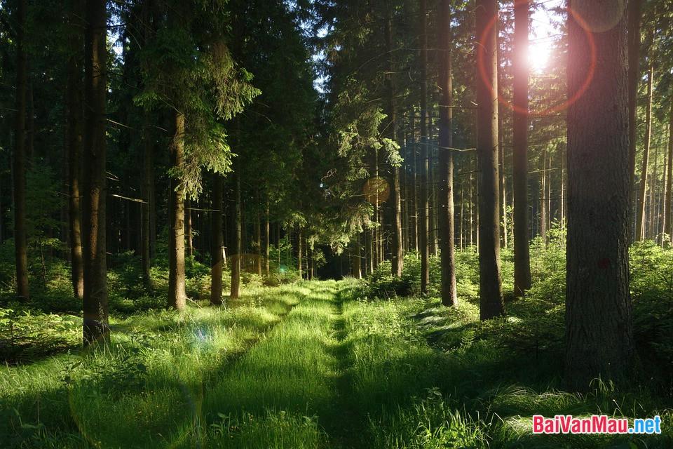 Truyện được mở đầu và kết thúc bằng hình ảnh rừng xà nu. Hãy phân tích vẻ đẹp và ý nghĩa biểu tượng của hình ảnh ấy