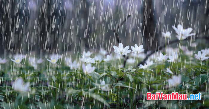 Văn miêu tả - Em hãy tả cơn mưa rào mùa hạ