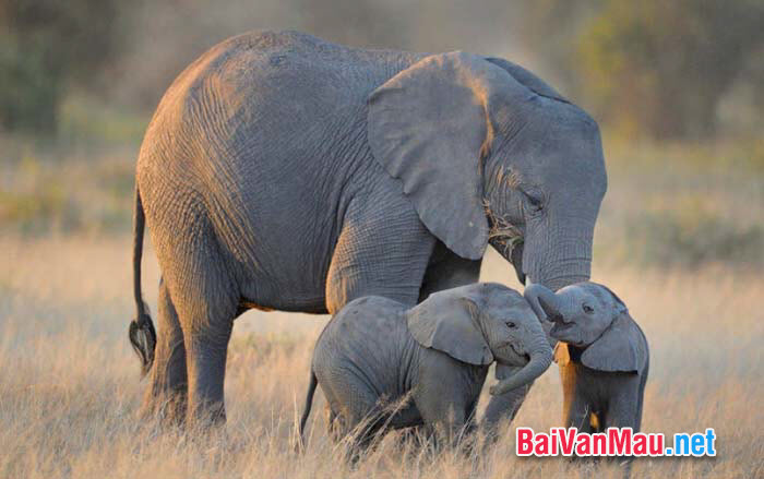 Văn tả con vật - Em hãy tả con voi trong sở thú