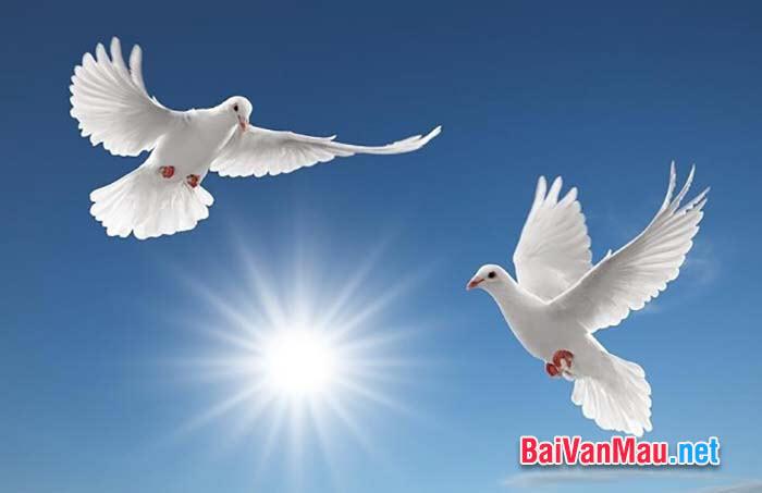 Văn tả con vật - Em hãy quan sát và miêu tả đàn chim bồ câu nhà em (hoặc em biết)