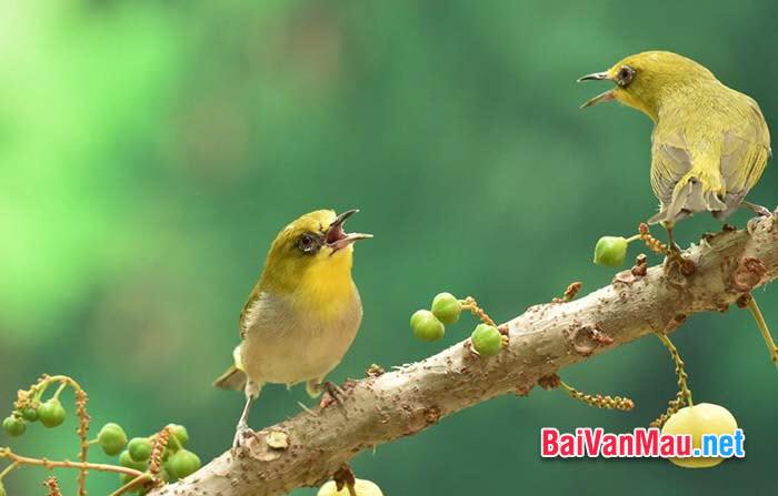 Chim sâu là loài có ích cho khu vườn nhà em. Em hãy tả con chim sâu đó cho mọi người cùng nghe