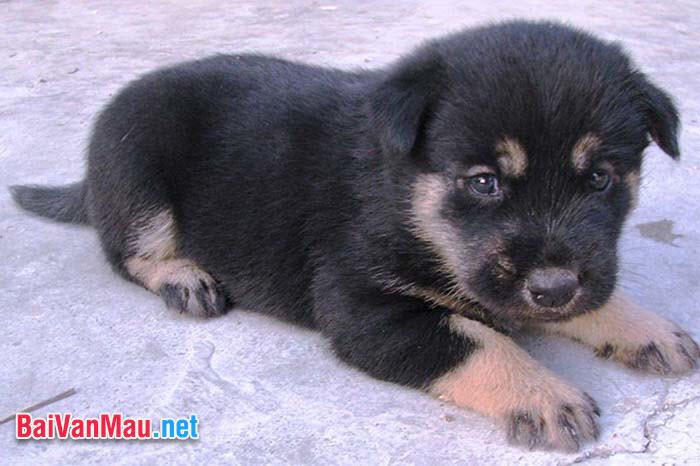 Văn tả con vật - Em hãy tả con chó mà em yêu quí nhất
