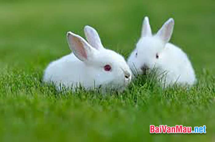 Văn tả con vật - Em hãy tả con thỏ