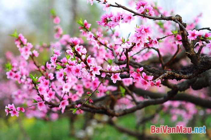 Phân tích bài thơ Mùa xuân nho nhỏ (Thanh Hải)