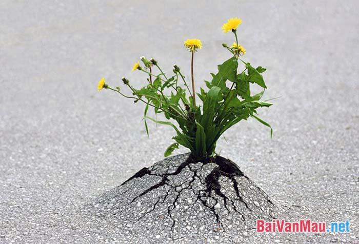 Giữa một vùng sỏi đá khô cằn, cây hoa dại vẫn mọc lên và nở những chùm hoa thật đẹp. Anh (chị) hãy phát biểu những suy nghĩ của mình trước hiện tượng trên?