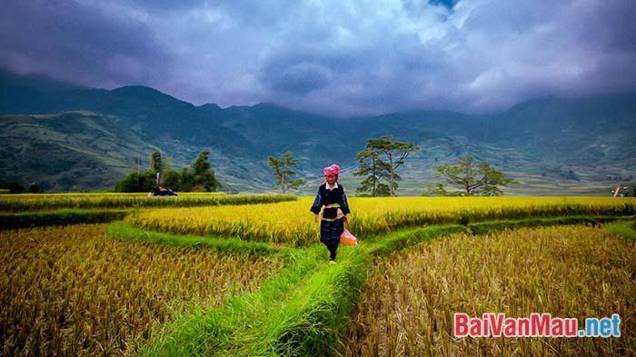 Tính dân tộc trong bài thơ Việt Bắc của Tố Hữu được biểu hiện cụ thể ở những phương diện nào?