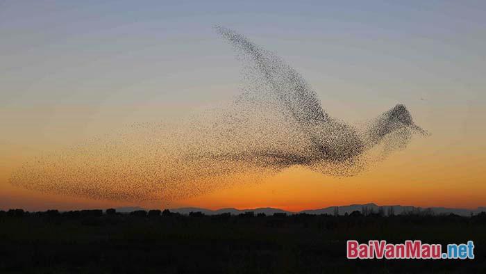 Thích Nhất Hạnh đã từng có câu: Hãy như dòng sông nhập vào biển cả. Hãy như con ong, con chim bay thành đàn. Anh/Chị hiểu thế nào về ý kiến trên, hãy bình luận bằng một bài văn ngắn