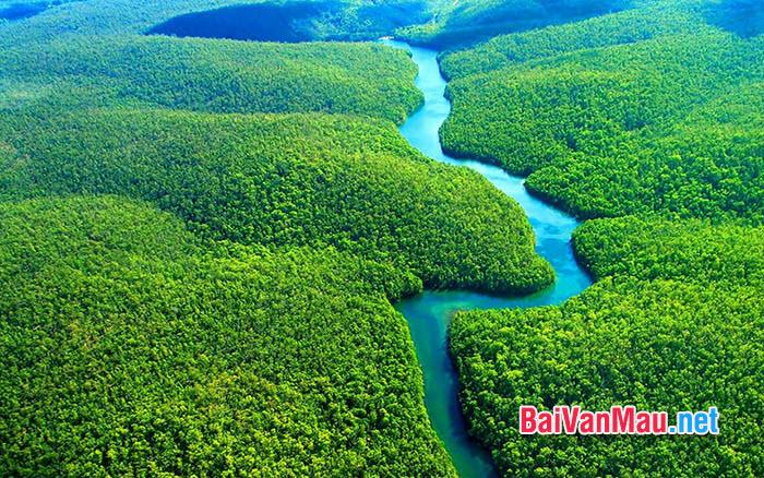 Phân tích hình ảnh cây xà nu sinh sôi khỏe, sức sống mãnh liệt trong truyện Rừng xà nu của Nguyễn Trung Thành