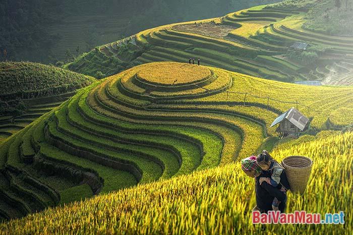 Em hãy nêu suy nghĩ của em về thiên nhiên và con người ở Sa Pa trong truyện ngắn Lặng lẽ Sa Pa của tác giả Nguyễn Thành Long