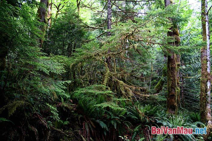 Văn nghị luận - Bảo vệ rừng là bảo vệ cuộc sống của chúng ta