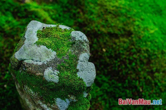 Thiên nhiên là người bạn tốt của con người. Con người cần yêu mến và bảo vệ thiên nhiên. Em hãy chứng minh điều đó