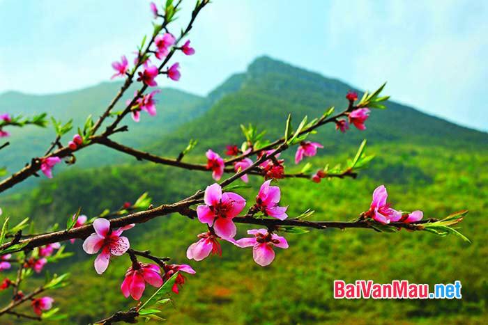 Viết doan văn biểu cảm 8 - 10 câu về mùa xuân