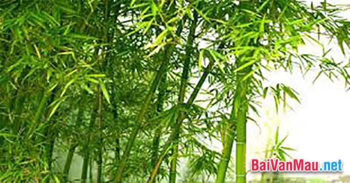 Em hãy viết một bài văn biểu cảm về cây tre Việt Nam