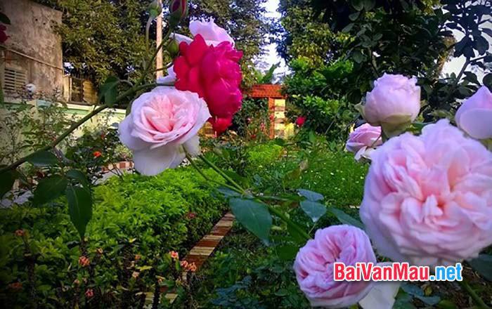 Em hãy bài văn miêu tả buổi sáng ở khu vườn